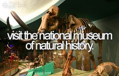 Visit the National Museum of Natural History / Bucket List Ideas / Before I Die National History, National Museum, Carpe Diem, Bucket List Before I Die, Night At The Museum, Life List, One Day I Will, Lets Do It, In This World