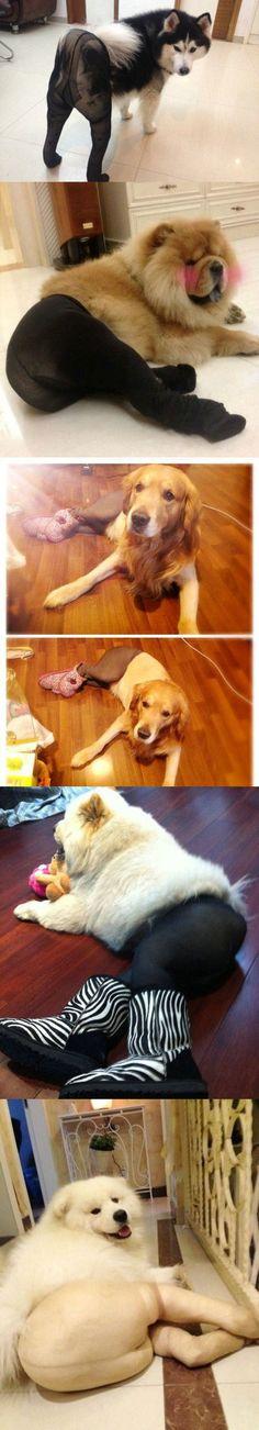 When dogs wear silk socks...