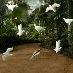 Birds 3D wallpaper