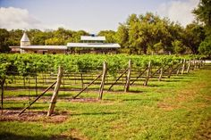 Texas Hill Country Wine Trail - Vintage Oaks