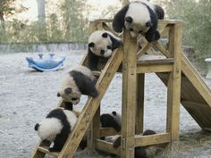 In honour of the very cute pandas on a slide video I watched today