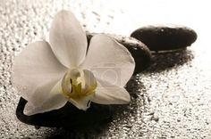 Bílá orchidej a kameny po mokrém povrchu s odleskem Stud Earrings, Floral, Flowers, Jewelry, Jewlery, Jewerly, Stud Earring, Schmuck, Jewels