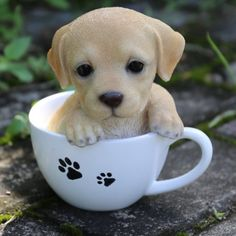 Hi-Line Gift Ltd. Te Hi-Line Gift Ltd. Teacup Labrador Puppy Statue - cooking tips Baby Animals Super Cute, Cute Little Animals, Cute Funny Animals, Cute Cats, Funny Dogs, Cute Dogs And Cats, Tiny Baby Animals, Cut Animals, Cute Little Puppies