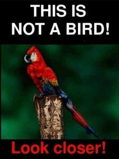 Beautiful Parrot Art to crack your mind Optical Illusion Paintings, Amazing Optical Illusions, Optical Illusions Pictures, Funny Illusions, Eye Illusions, Illusion Pictures, Optical Illusions Brain Teasers, Optical Illusion Tattoo, Eye Tricks