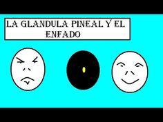 La glándula pineal y el enfado