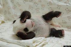 Resultado de imagem para imagem bebe panda