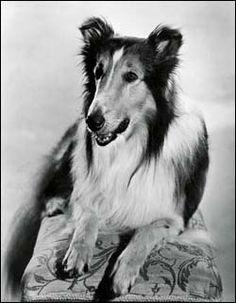 Lassie from Lassie Come Home.