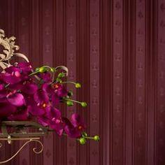 Modele tapet decorativ superlavabil Venita Facebook Sign Up, Plants, Collection, Planters, Plant, Planting