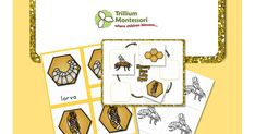 Life Cycle of the Honey Bee: 3 part cards with printable science page.
