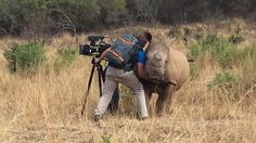 Travel Adventure Nature ( adventurefervor ) - What do you do if a rhino walks straight up to you while you're filming and wants a belly scratch?🦏 You better rub that rhino like your life depends on it Animals Of The World, Animals And Pets, Baby Animals, Wild Rhino, African Rhino, Cute Funny Animals, Stuffed Animals, Animal Kingdom, Pet Birds