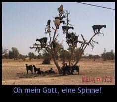 Oh mein Gott, eine Spinne! - www.MegaPics.ch