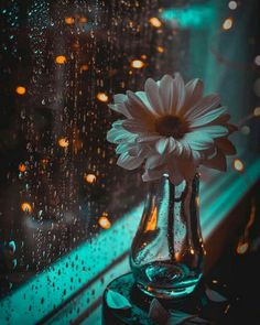 """soul-of-an-angel: """"Rainy days Rainy Day Wallpaper, Bright Wallpaper, Flower Phone Wallpaper, Aesthetic Pastel Wallpaper, Scenery Wallpaper, Cute Wallpaper Backgrounds, Pretty Wallpapers, Galaxy Wallpaper, Aesthetic Wallpapers"""