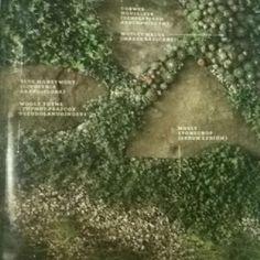 Durable perennials for your walk ways - blue money wort - wooly thyme - cobweb houseleek - motley mazus - mosey stonecrop