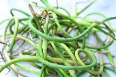 Cut those garlic scapes about a month before you harvest garlic. Harvest, Garlic, Posts, Urban, Messages