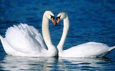 Aves exóticas y fantásticas en el paraíso   Banco de Imágenes Gratis