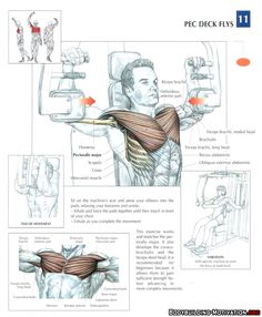 training_anatomy_chest_pec_deck_flys_2014-02-19_23-18-05.jpg (700×849)
