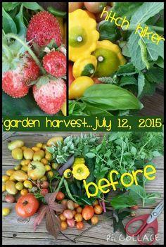 Garden Harvest...July 12, 2015 Before arranging in the basket.  www.gardenanywherebox.com