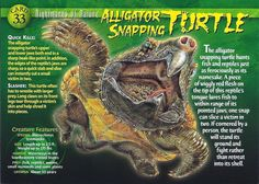 Name: Alligator Snapping Turtle Category: Nightmares of Nature Card Number: 33 Front: Alligator Snapping Turtle Nightmares of Nature Card 33 front Back: Alligator Snapping Turtle Nightmares of Nature Card 33 back Trading Card: Wild Creatures, Mythical Creatures, Strange Creatures, Types Of Turtles, Alligator Snapping Turtle, Turtle Facts, Adventure Magazine, Dangerous Animals, Animal Species