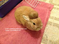 Stuff on My Rabbit, Kiwi http://sulia.com/my_thoughts/062eb898-7931-4af4-b0c8-a843ce479d98/?pinner=undefined