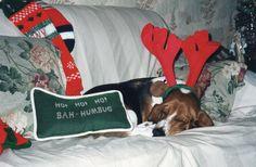 Sleepy christmas Basset @HillcrestBaptist Preschool Sherrie Caylor Mall #naughty or #nice #christmas
