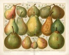 1894 Pear Fruit Antique Chromolithograph Print | eBay