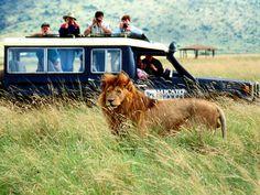 Safari in Africa and Botswana -- by Judy Koutsky