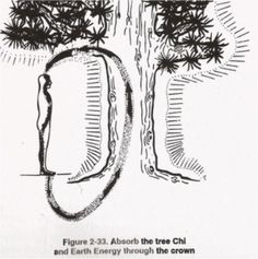 Advanced Science On How To REALLY Befriend A Tree