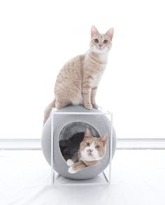 Meyou Paris - the CUBE, bed, cozy shelter and claw sharpener - Light grey cocoon / camel pillow / white metal frame Cubes, Paris Cat, Chartreux Cat, Cat Cube, Meyou, Lots Of Cats, Paris Design, Structure Metal, Cat Supplies