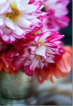 Stefanie's amazing flowers/photography