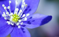 free flower wallpaper photos: Purple Flower Wallpaper