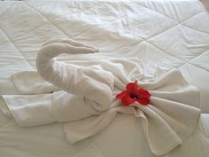 Did you know we work with many local hotels to provide them with fresh, sanitized linens and wash/dry/fold service before they welcome you? Laundry Company, Laundry Business, Hotel Secrets, Free Hotel, Local Hotels, Spa Center, Holiday Hotel, Hotel Services, Hotel Bed