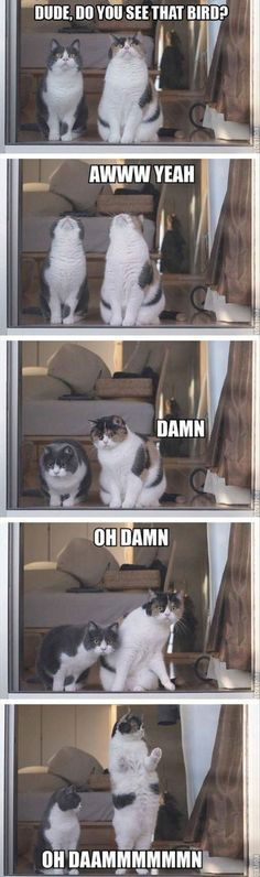 51 super ideas for funny cute cats hilarious animal pictures Cute Kittens, Cats And Kittens, Cats 101, Kitty Cats, Funny Kitties, Funny Dogs, Funny Horses, Ragdoll Kittens, Cute Funny Animals
