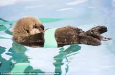 Orphaned sea otter pup gets some TLC after being found washed up ...