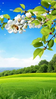 Spring Background Wallpaper by im_mehta - cd - Free on ZEDGE™ Beautiful Landscape Wallpaper, Beautiful Flowers Wallpapers, Beautiful Landscapes, Photo Background Images, Background For Photography, Photo Backgrounds, Spring Backgrounds, Beautiful Nature Pictures, Nature Images
