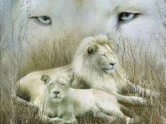 POETRY THAT COMES FROM THE HEART AND SOUL: WHITE LIONS (poem updated)
