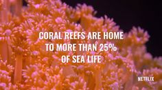 Netflix's 'Chasing Coral' brings dying reefs to life. http://grist.org/briefly/netflixs-chasing-coral-brings-dying-reefs-to-life/?utm_campaign=crowdfire&utm_content=crowdfire&utm_medium=social&utm_source=pinterest