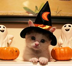 ♥♥♥ 10.Halloween - 15 Hilarious Cats in Costumes