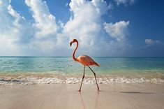 Flamingo   Dominican All Inclusive Resorts - Punta Cana   View Package Deals up to 60% Off!
