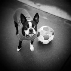 Soccer man's best friend.