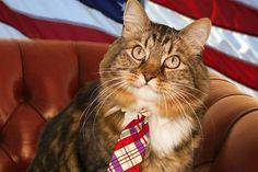 The cat that comes into Polica? Un gatto entra in politica?
