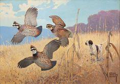 "Art scene ""Flushed"" by Lynn Bogue Hunt An autumn scene with three quail and a bird/hunting hound dog Mid Century, Unused Some wear and soiling on right back. Grouse Hunting, Quail Hunting, Hunting Art, Hunting Dogs, Pheasant Hunting, Turkey Hunting, Wildlife Paintings, Wildlife Art, Bird Paintings"