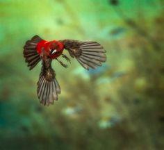 Alfredo Sanchez Roman Natural Life, Roman, Jet, Birds, Nature, Animals, Collections, Amazing, Natural Living