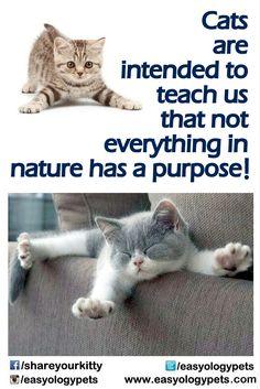 Cats are intended to teach us that not everything in nature has a purpose