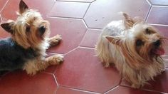 Tinoco e Milou