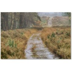 Trademark Fine Art 'Path' Canvas Art by Cora Niele, Size: 16 x 24, Multicolor