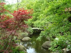 Anderson Japanese Gardens - my favorite Japanese Garden!
