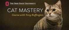 Cat Mastery iTunes U Course