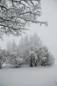 my home-I love Vermont right after it snows...it has this serene feeling when the snow is untouched!!