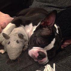 sleeping with the toyrat