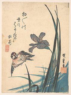 Utagawa Hiroshige (1797–1858) - Iris and Sparrow - 1832 ~